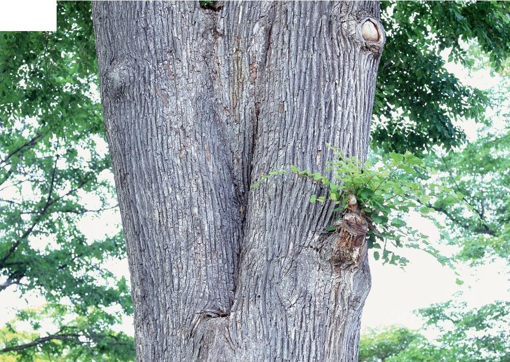 树木纹理贴图jpg免费下载_材质贴图素材