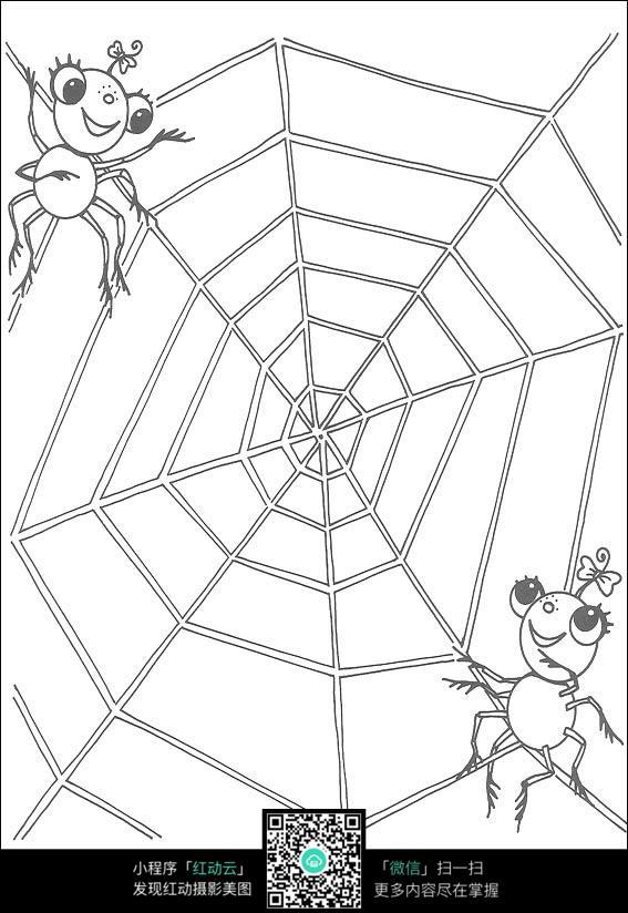 蜘蛛网的蜘蛛图片