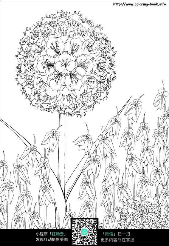 卡通蒲公英手绘线描图片