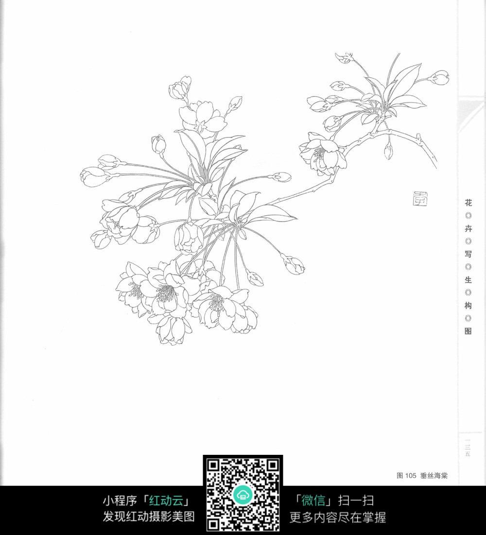 花草树木 垂丝海棠手绘插图  请您分享: 红动网提供花草树木精美素材