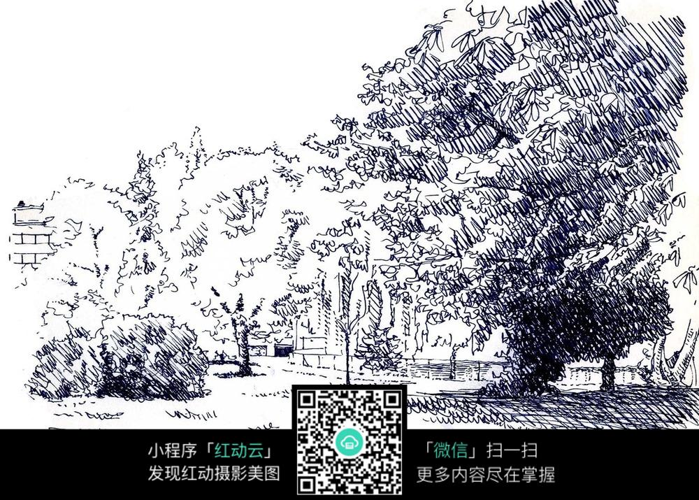 公园大树手绘图片