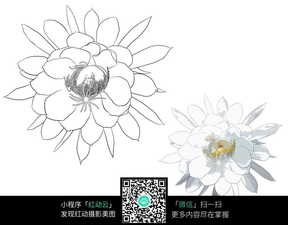 免费素材 图片素材 漫画插画 花草树木 含笑花上色稿