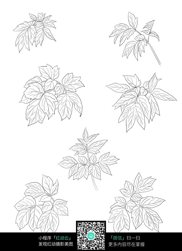 花叶工笔画