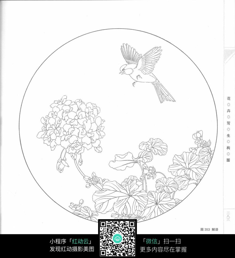 麻雀绣球花工笔画