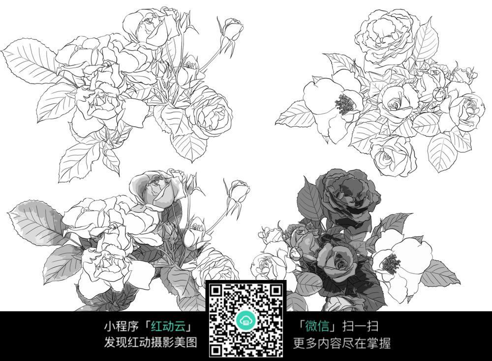 玫瑰花工笔画图片
