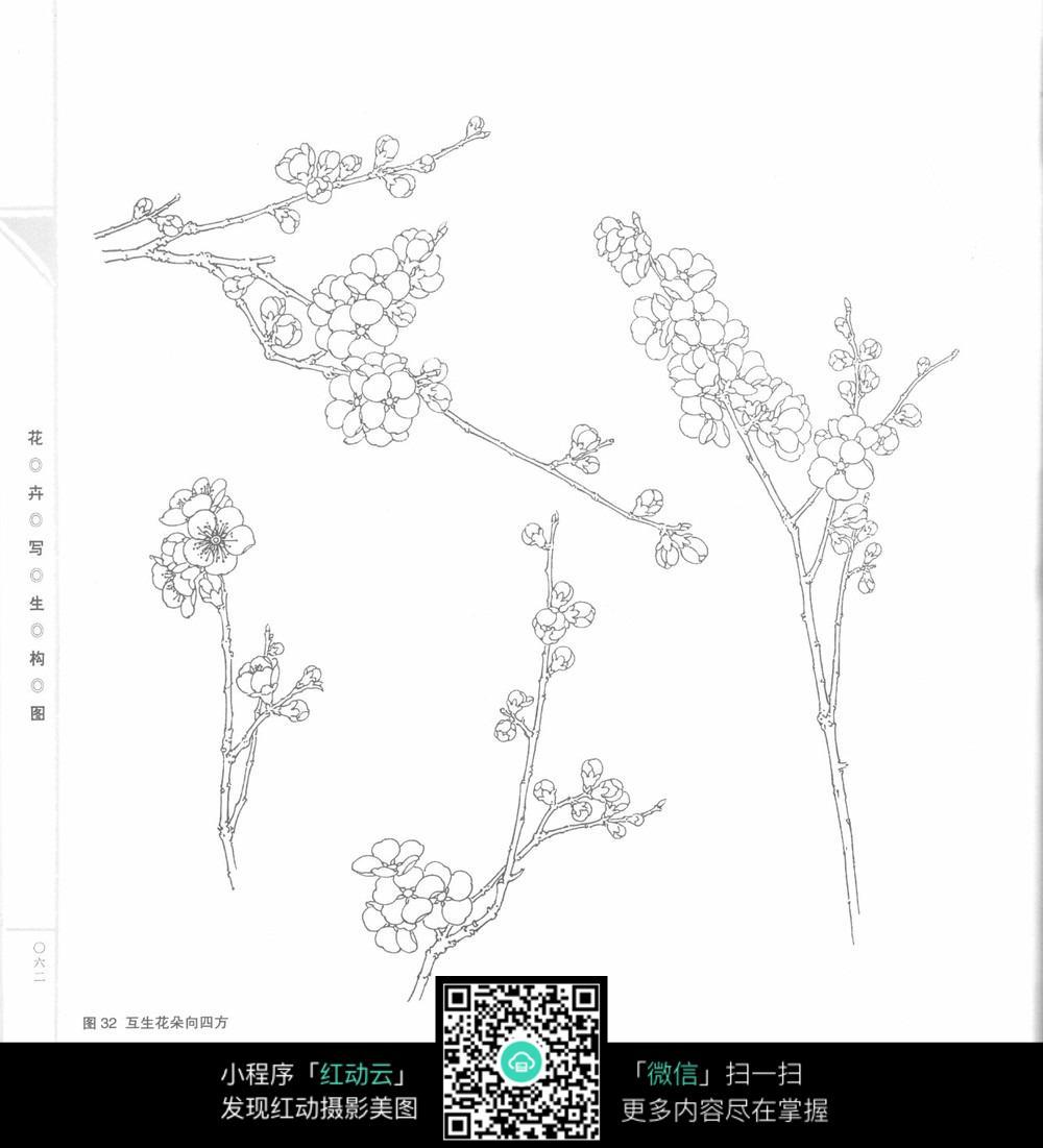 梅花 手绘 写生 构图 线稿