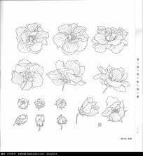 芙蓉花与叶子写生构图线稿素材图片图片