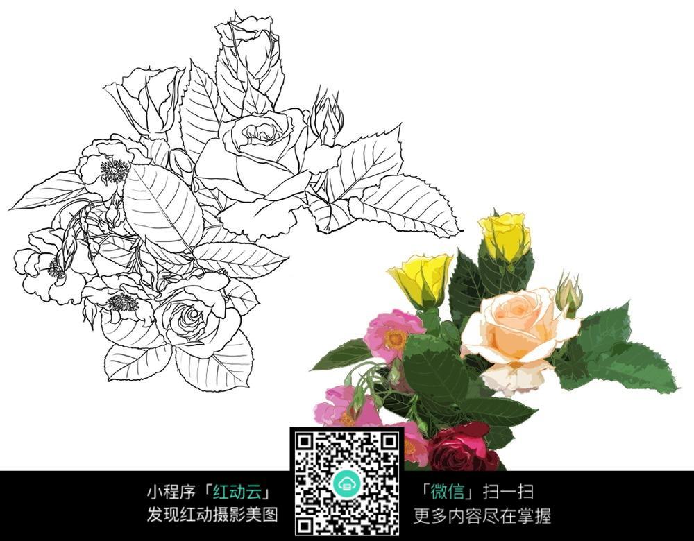 画的各种花卉,花草树木矢量图素材免费下载