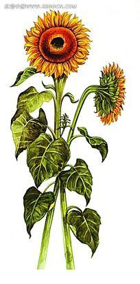 手绘太阳和向日葵