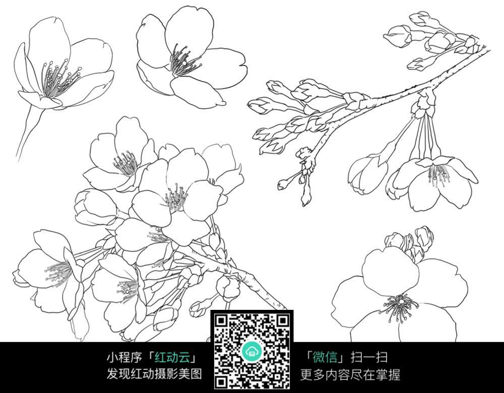 手绘樱花插画图片