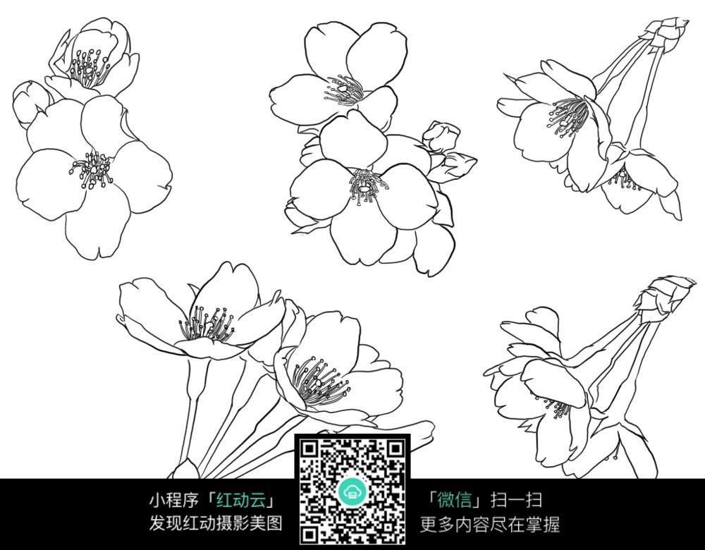 手绘樱花工笔画图片免费下载 编号3707974 红动网
