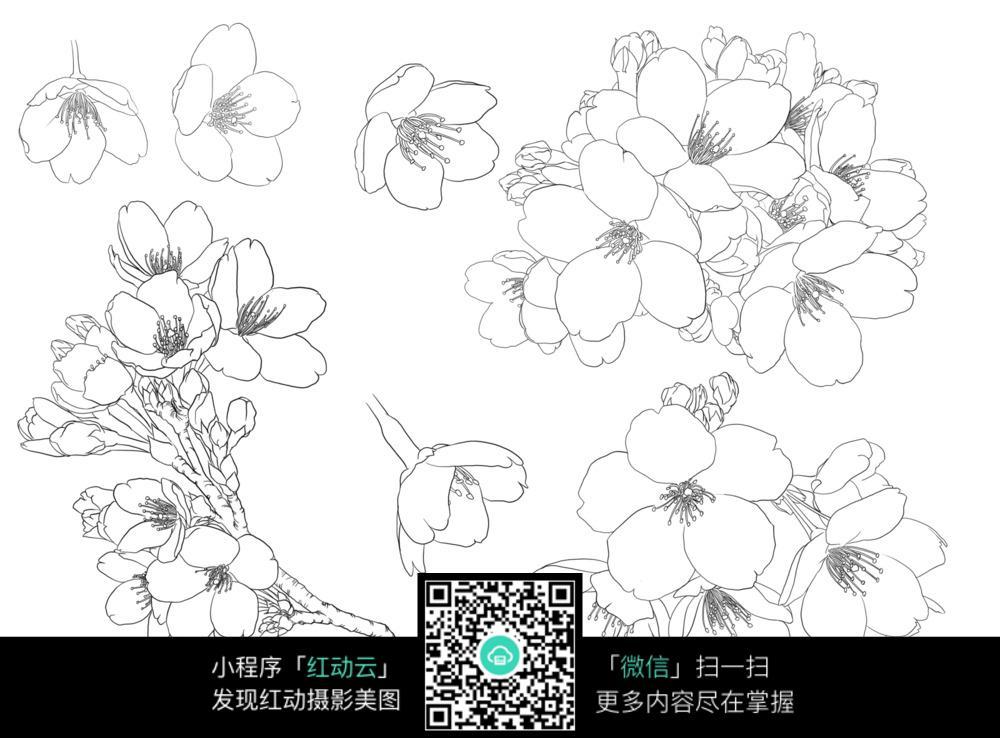 花草树木简笔画-桃花工笔插画图片免费下载 编号3707962 红动网