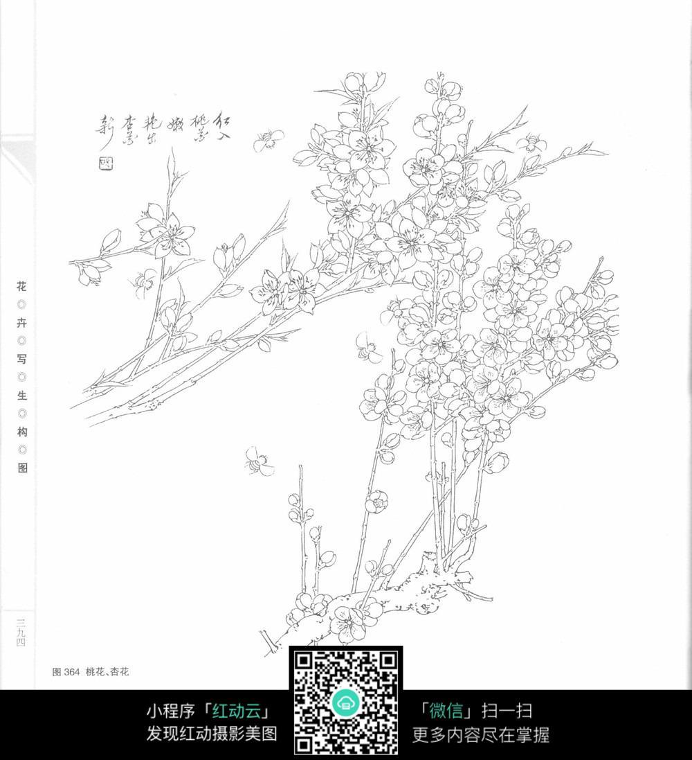 桃花手绘设计线稿