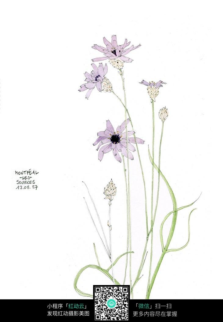鲜花景观手绘线描图