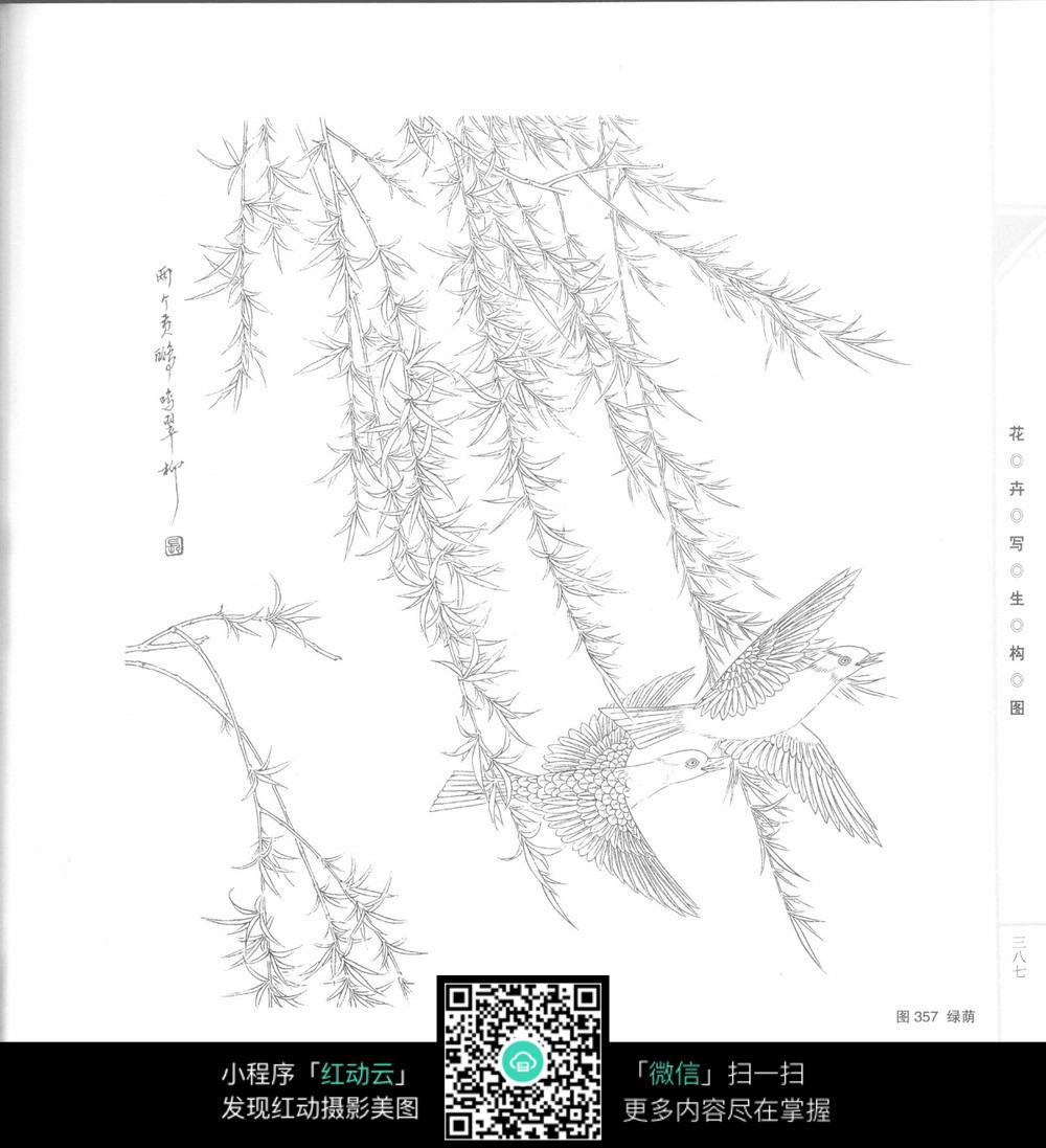 燕子翠柳工笔画图片免费下载 编号3707414 红动网