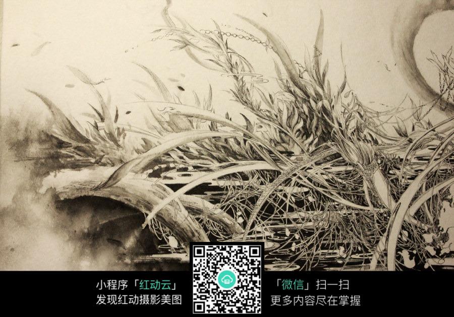 杂草手绘图_花草树木图片