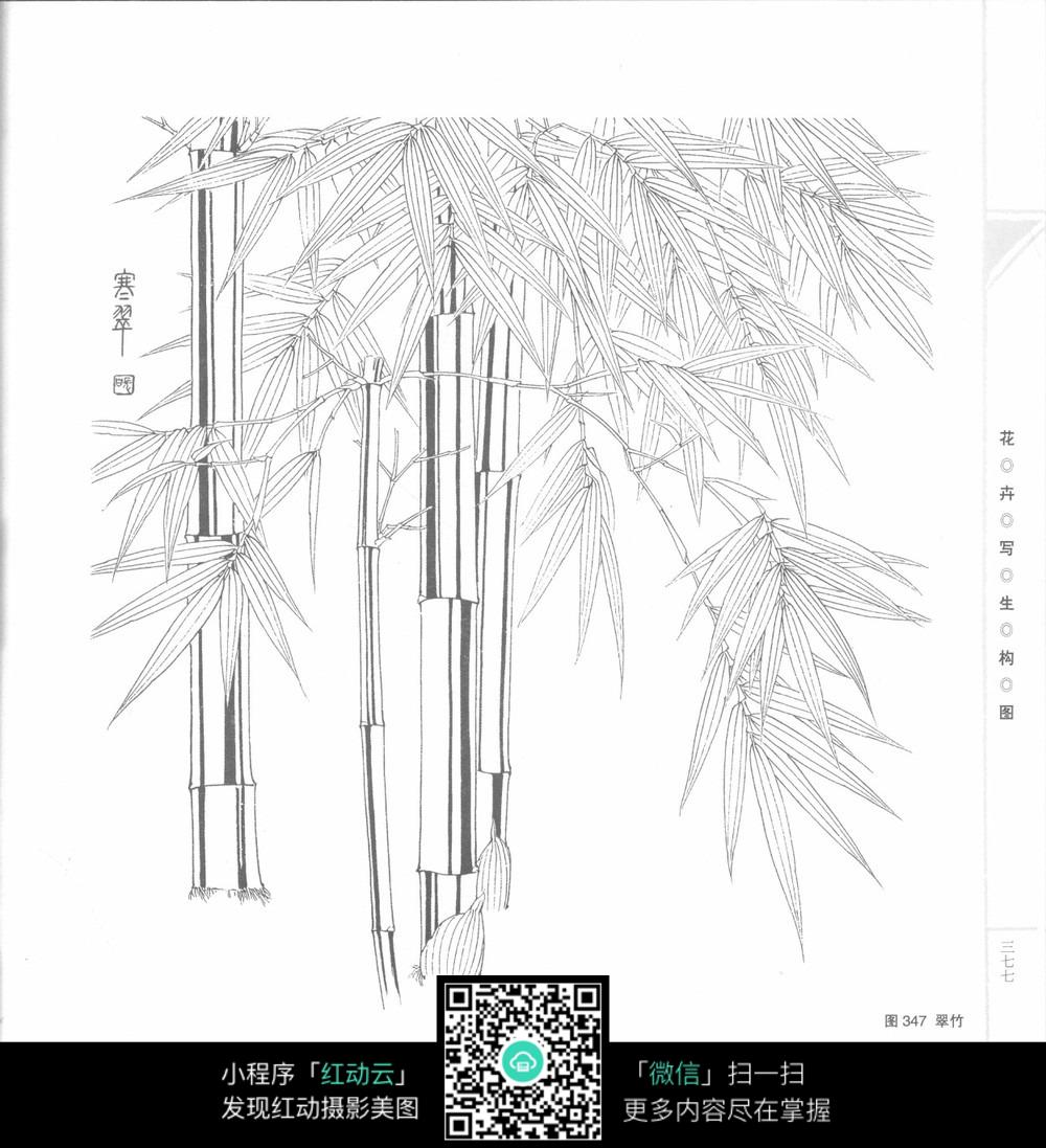 竹子手绘图图片_花草树木图片
