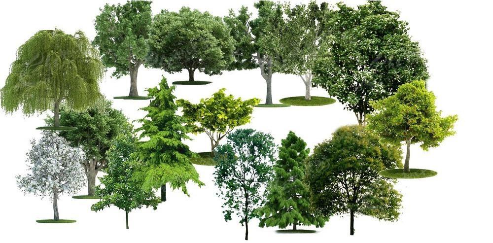 大型树木绿化psd素材