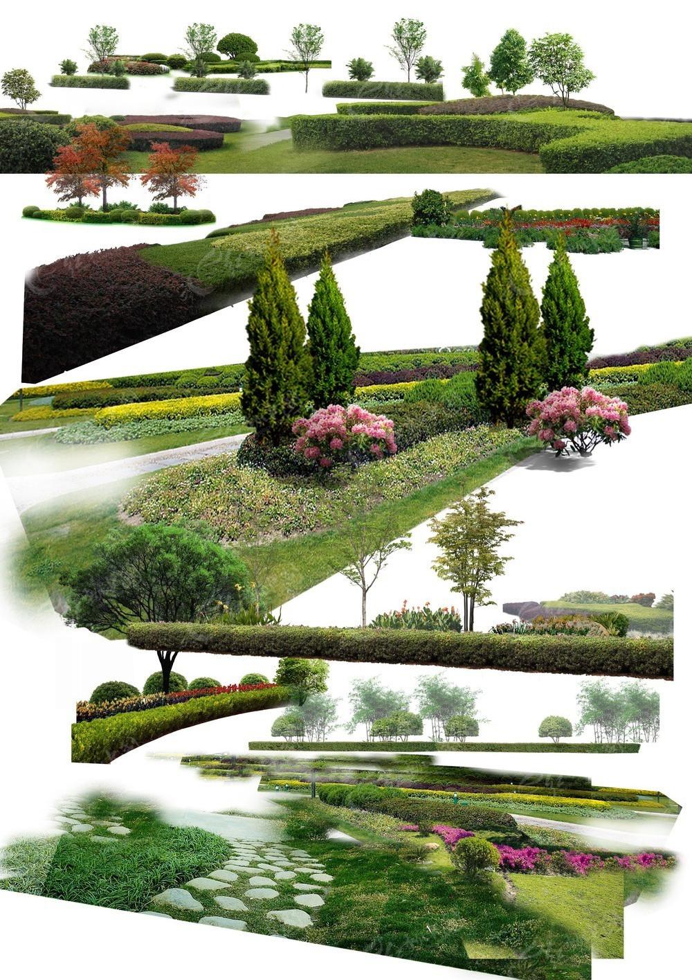 绿化 园林 景观 园林景观 景观植物 植物 花木 花莆 植物素材 花卉