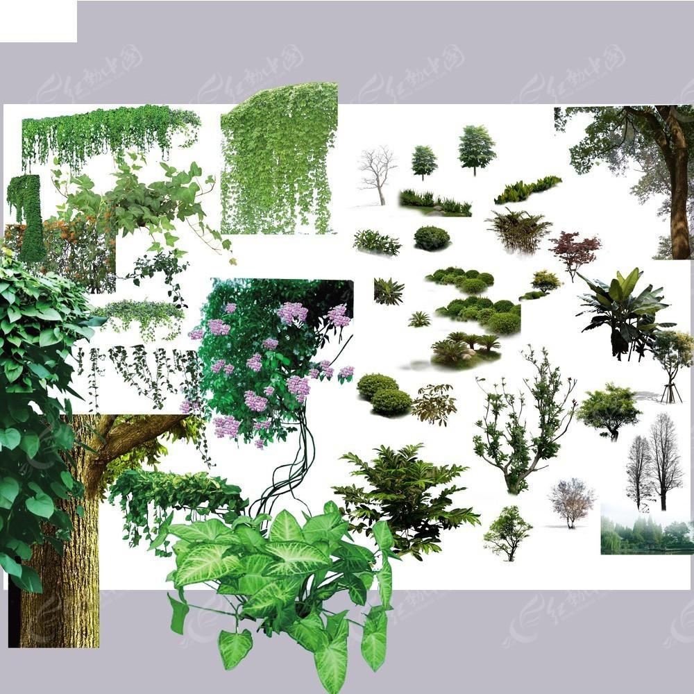 景观园林植物psd素材