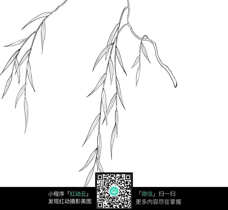 免费素材 图片素材 漫画插画 花草树木 柳条柳叶手绘线稿jpg图片