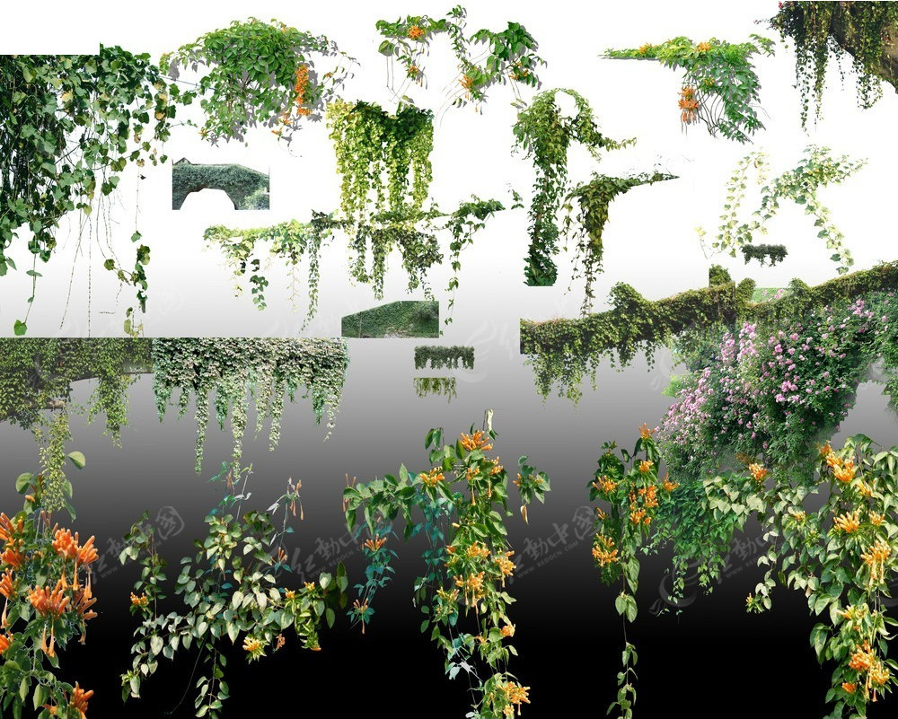 绿化藤蔓植物psd素材