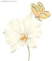 手绘蝴蝶与白色花朵