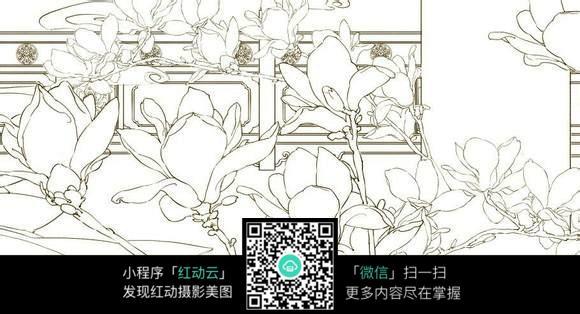 玉兰手绘线稿jpg图片_花草树木图片