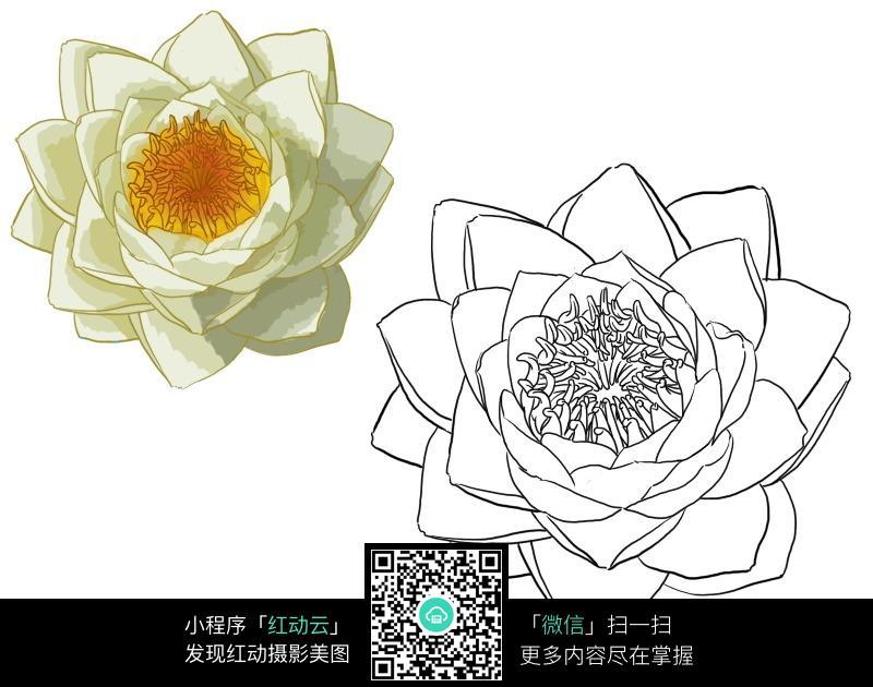 白莲花手绘上色稿