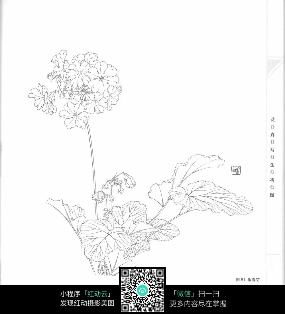 手绘彩色花卉图片_手绘彩色花卉图片大全_手绘彩色花卉背景图片