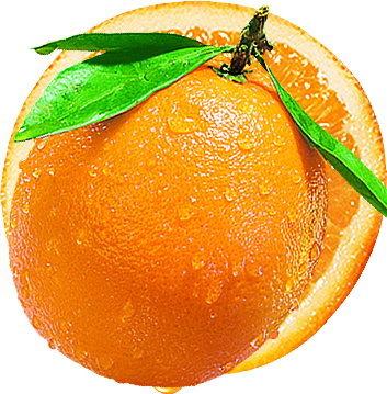 橙子切半手绘仿真水果插画图片
