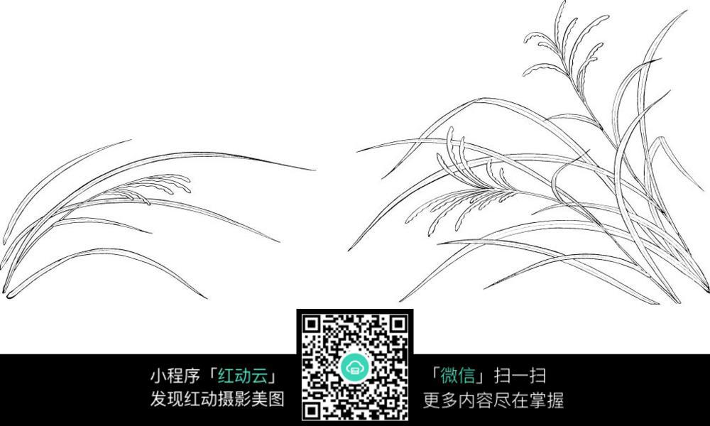 稻草手绘线稿