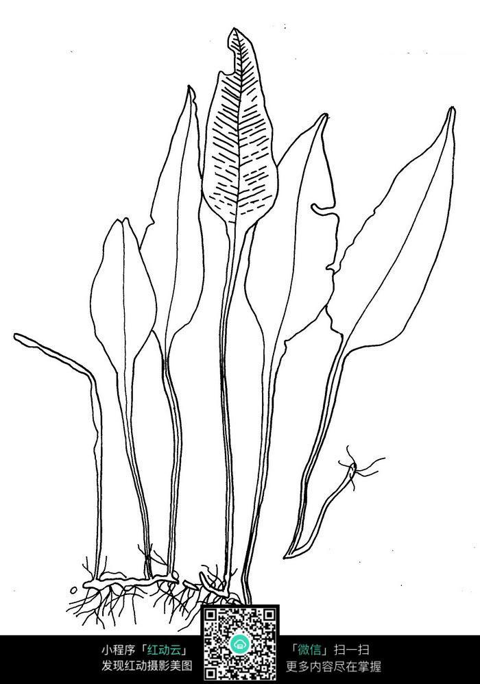 大片叶子手绘线稿图片