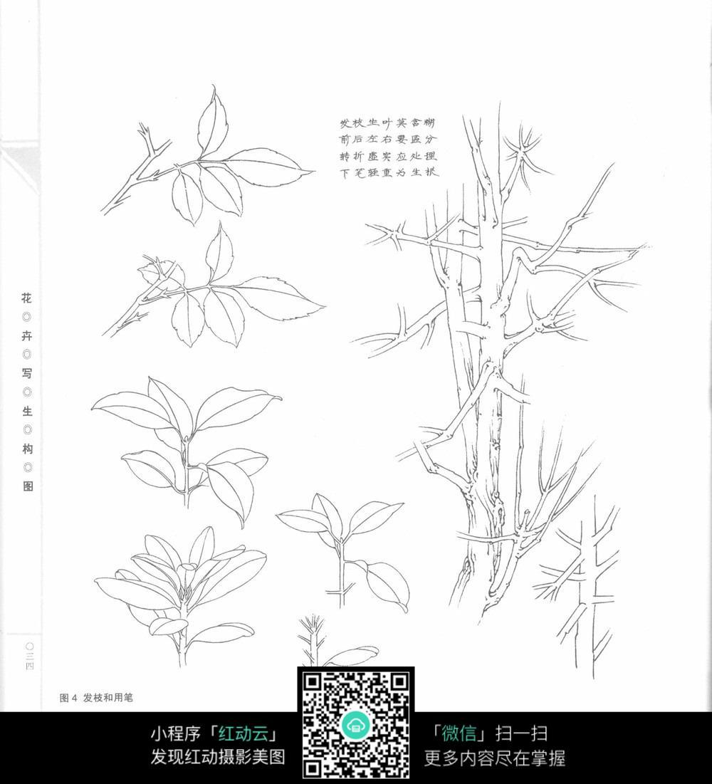 发枝和用笔植物线描