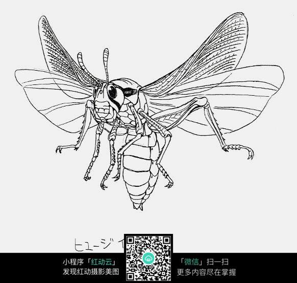飞行的大蜜蜂手绘线稿图