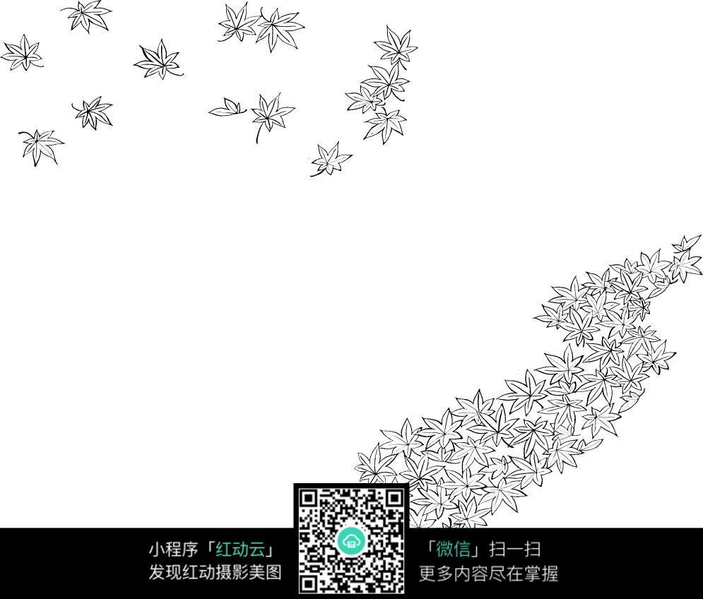 枫叶手绘线稿图片免费下载(编号3698572)_红动网
