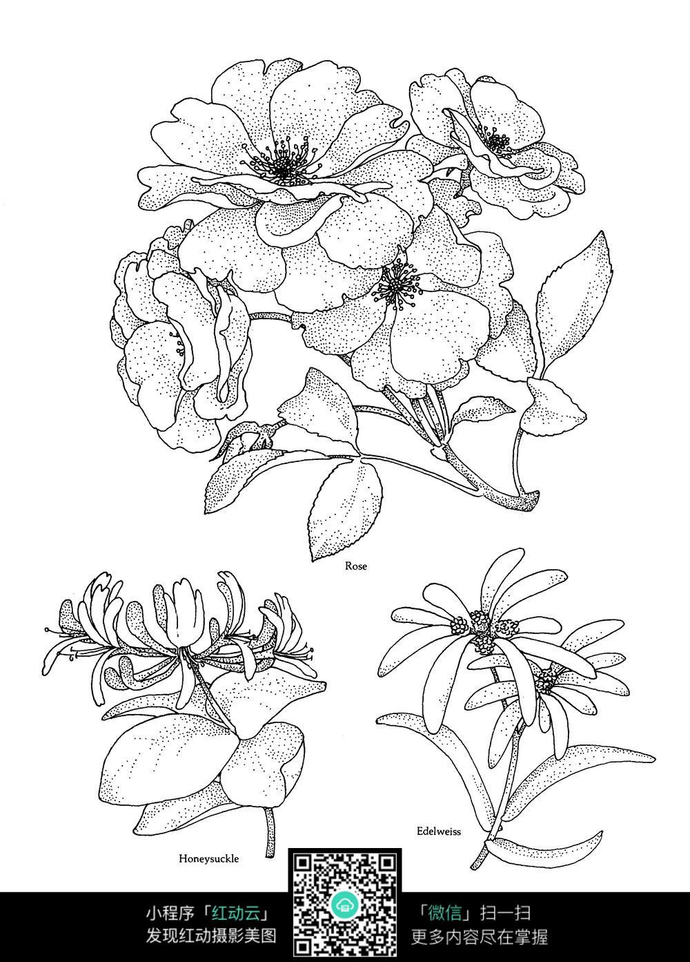 海棠花菊花图案素材