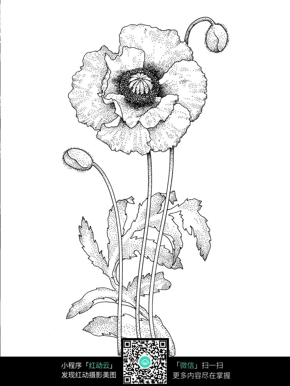 海棠花图案素材