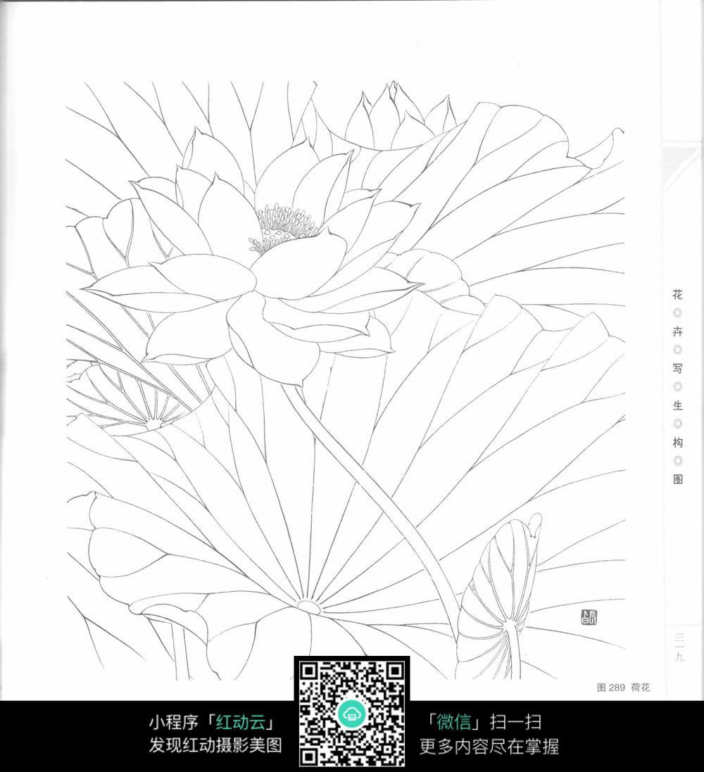 动漫树木手绘 线稿