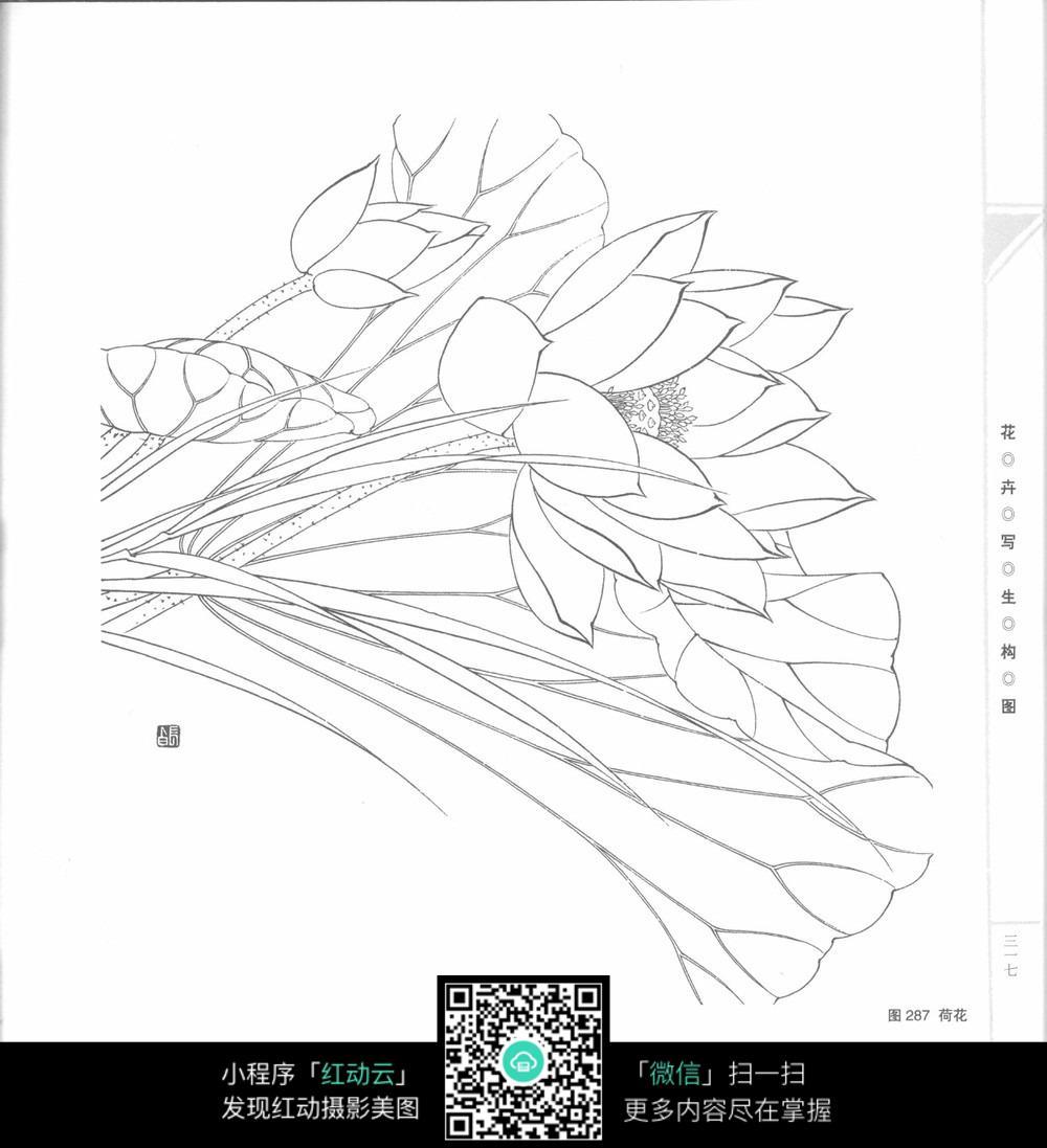 荷花写生构图素材_花草树木图片