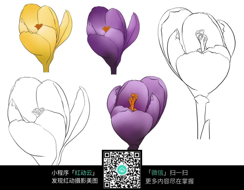 人物绘画  钢笔画  漫画手绘 素材 速写 涂鸦  写生 花朵含苞开放线描