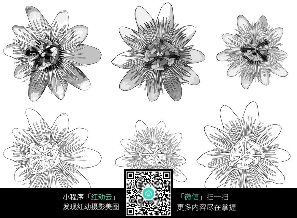 花朵黑白线描手绘图片