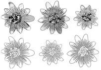 花朵黑白线描手绘