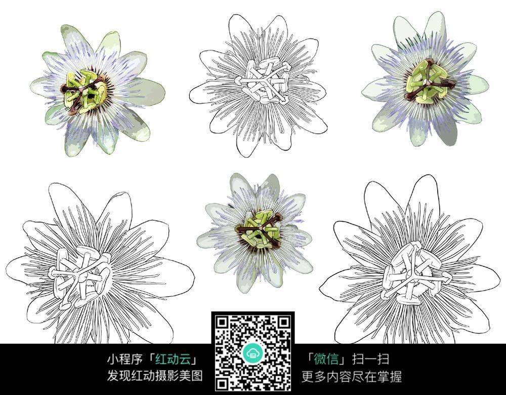 花朵花卉线描手绘