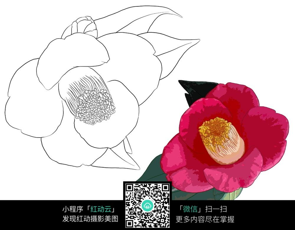 花朵花卉植物线描