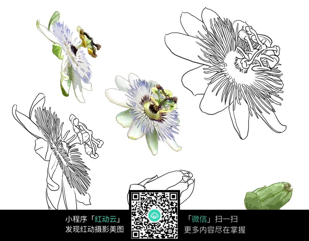 花朵手绘线描