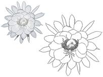 花朵植物叶子线描