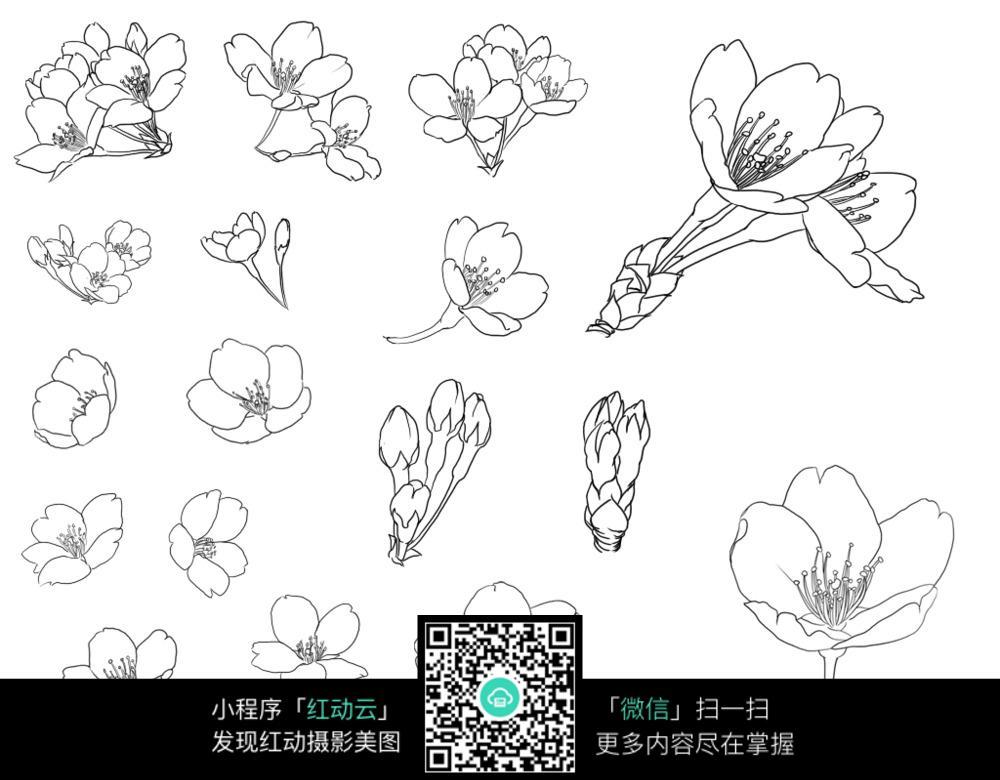 花卉手绘图图片_花草树木图片