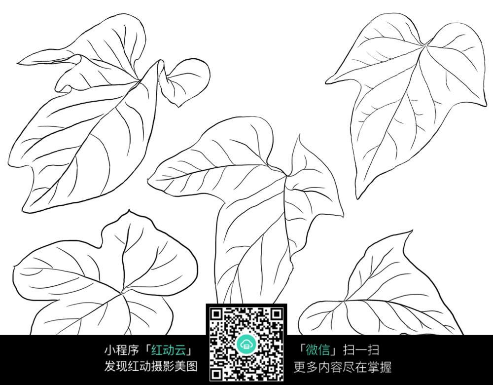 葫芦植物叶子线描图片
