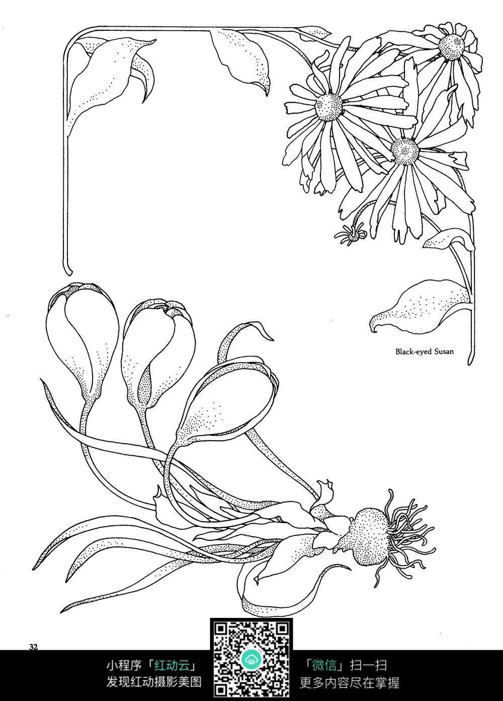 菊花风信子边框图案素材